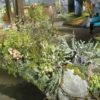 <b>The Old Sod Blooms at Philly Flower Show</b>